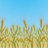 都道府県別の小麦の生産量ランキング